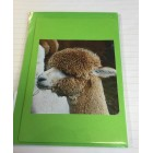 Alpaca Greeting Cards - Hungry Miss Honeystar